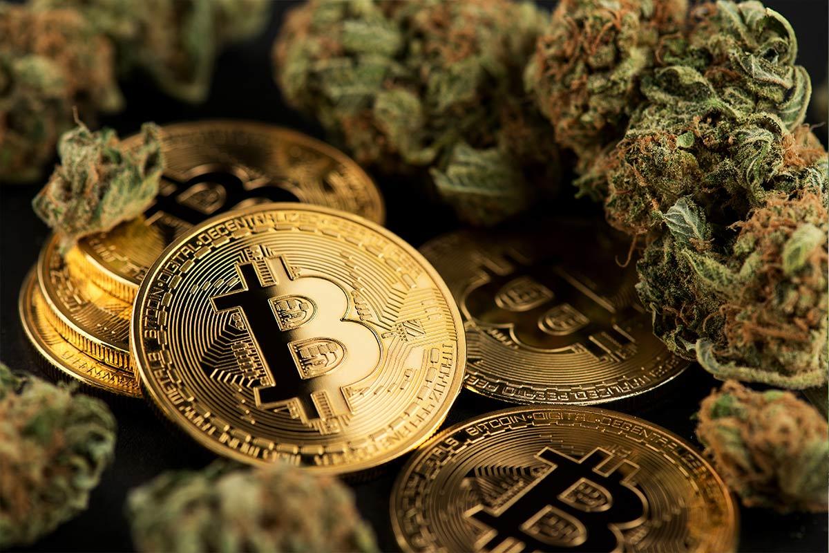 Criptomoeda e cannabis: uma combinação do paraíso?