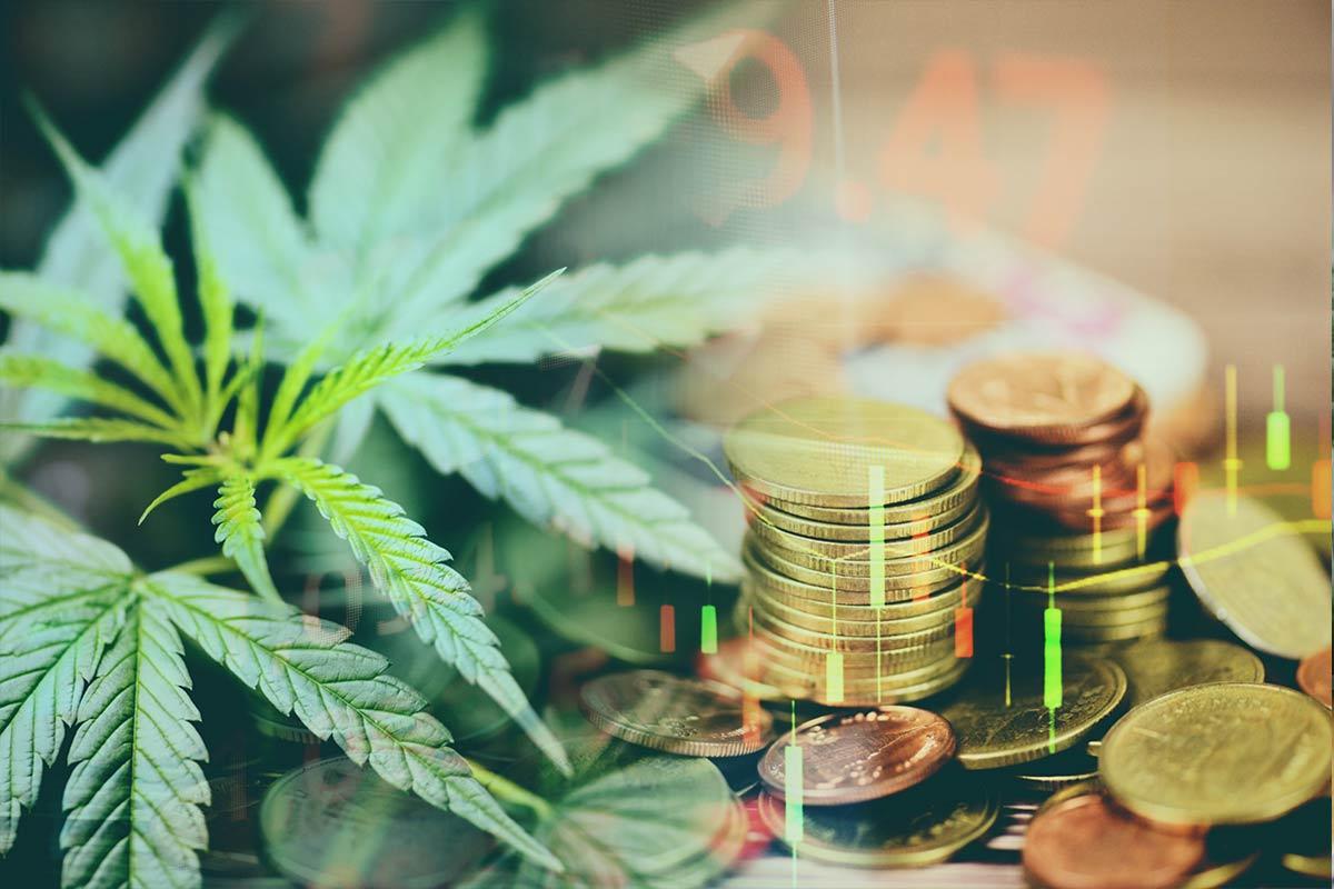 Como investir em cannabis