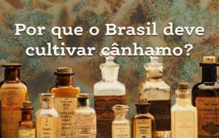 Por que o Brasil deve cultivar cânhamo?
