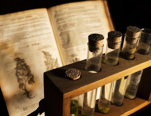Qual foi a primeira civilização a usar cannabis? | Histórico de uso da planta