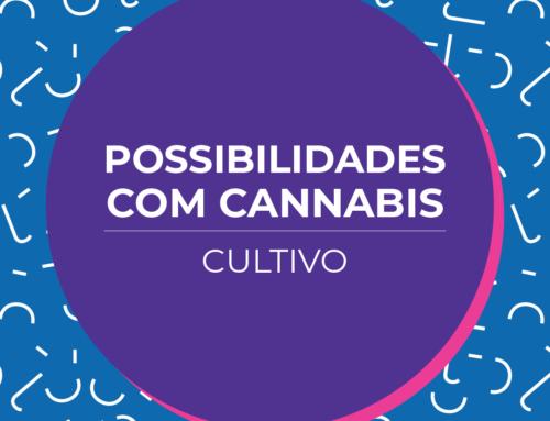 Possibilidades com a cannabis: cultivo