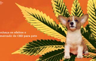 Conheça os efeitos e o mercado do CBD para pets