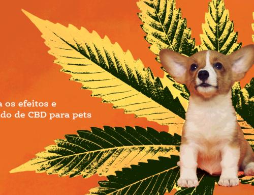 Conheça os efeitos e o mercado de CBD para pets