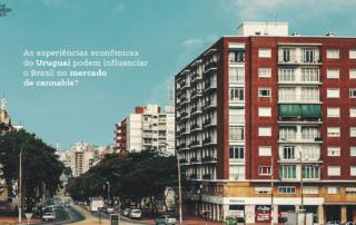 As experiências econômicas do Uruguai podem influenciar o Brasil no mercado de cannabis?