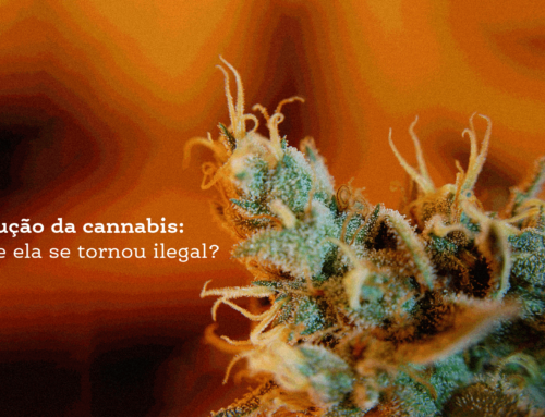 A evolução da cannabis: por que ela se tornou ilegal?