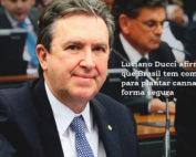 Luciano Ducci afirma que cultivo de cannabis no Brasil pode ser seguro