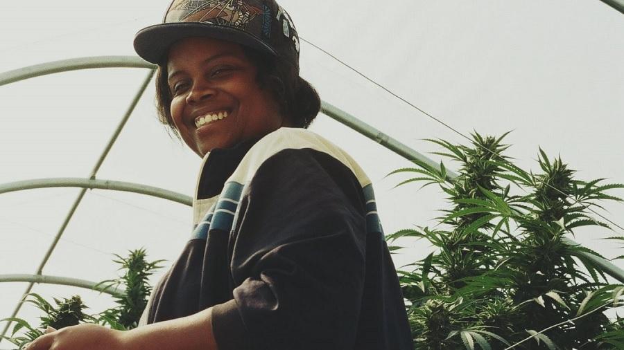 Legalização da Cannabis pode Reparar Injustiças Raciais