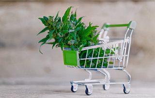 Mercado de Cannabis Global