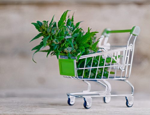 Mercado de cannabis global pisa no acelerador