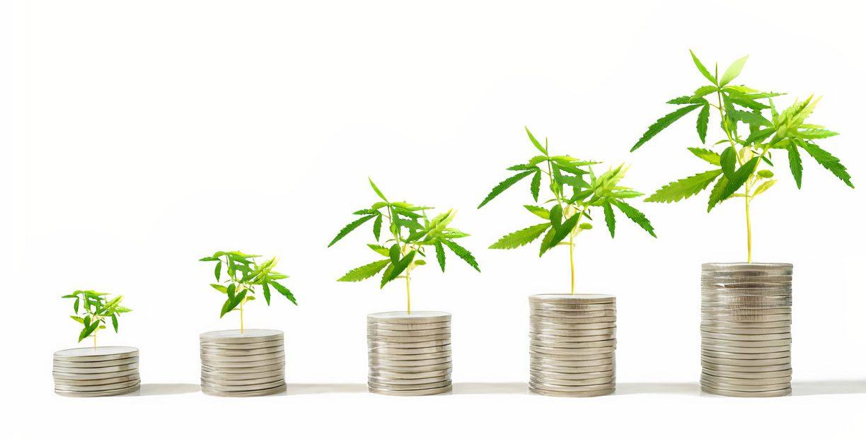 cannabis mercado