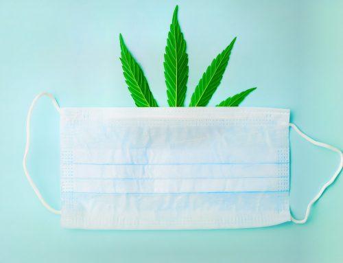 COVID-19 e Cannabis: o impacto no mercado