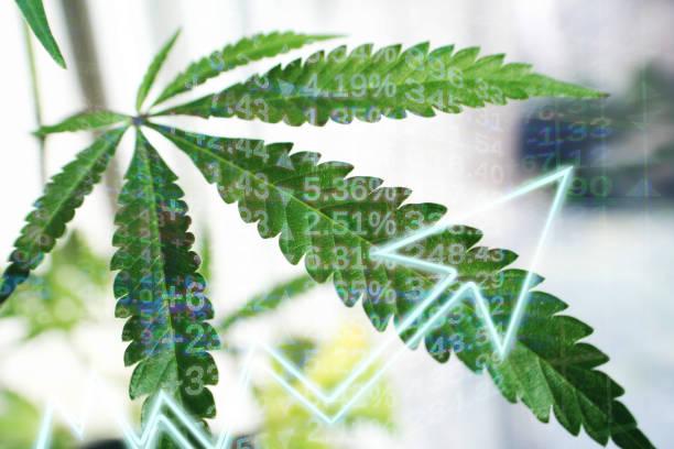 Mercado de cannabis: a hora é agora!