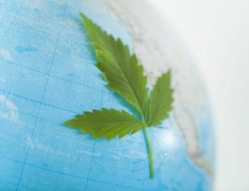 Cannabis Medicinal no mundo: quatro países promissores