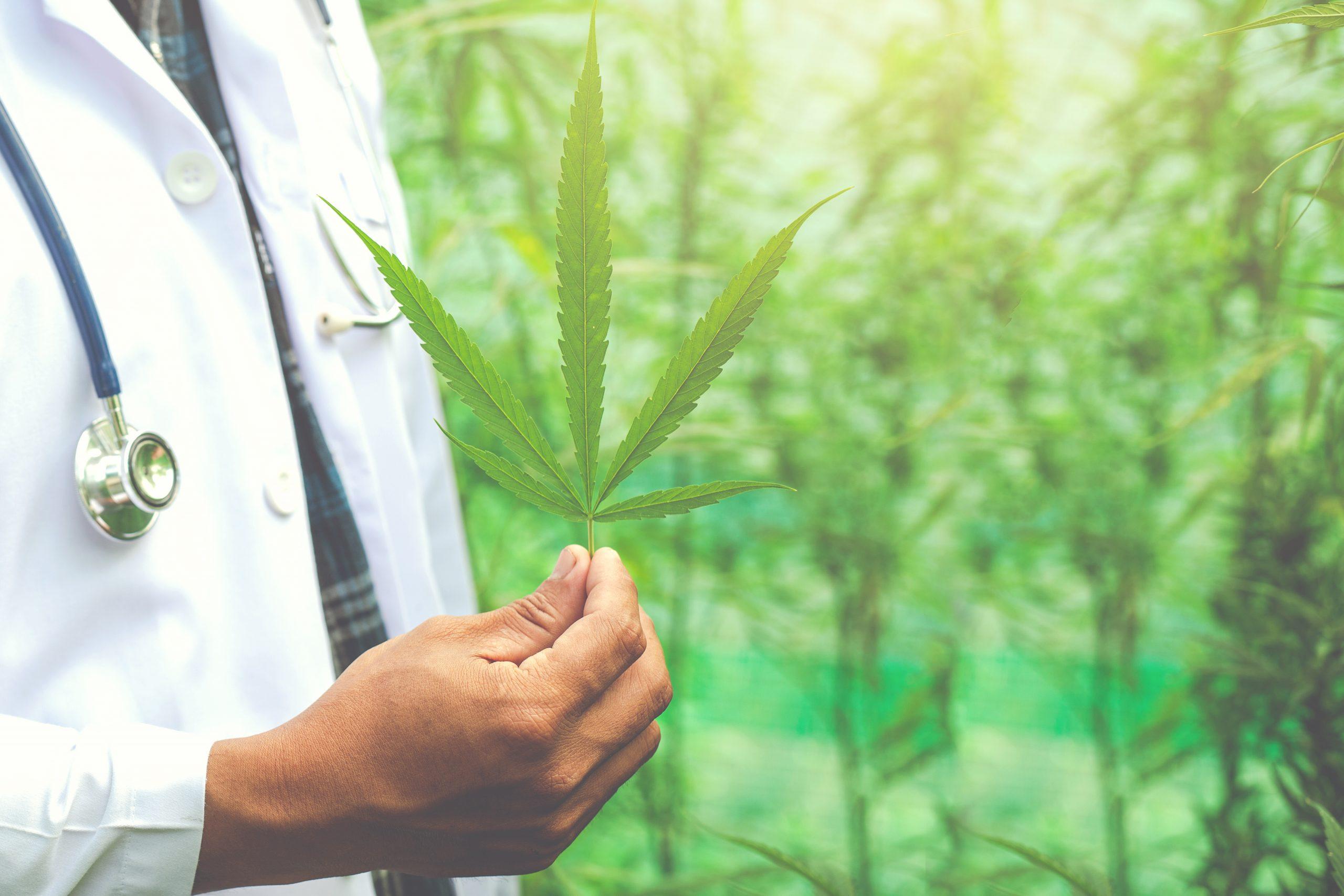 Cannabis e onu