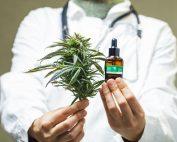 Cannabis Medicinal: