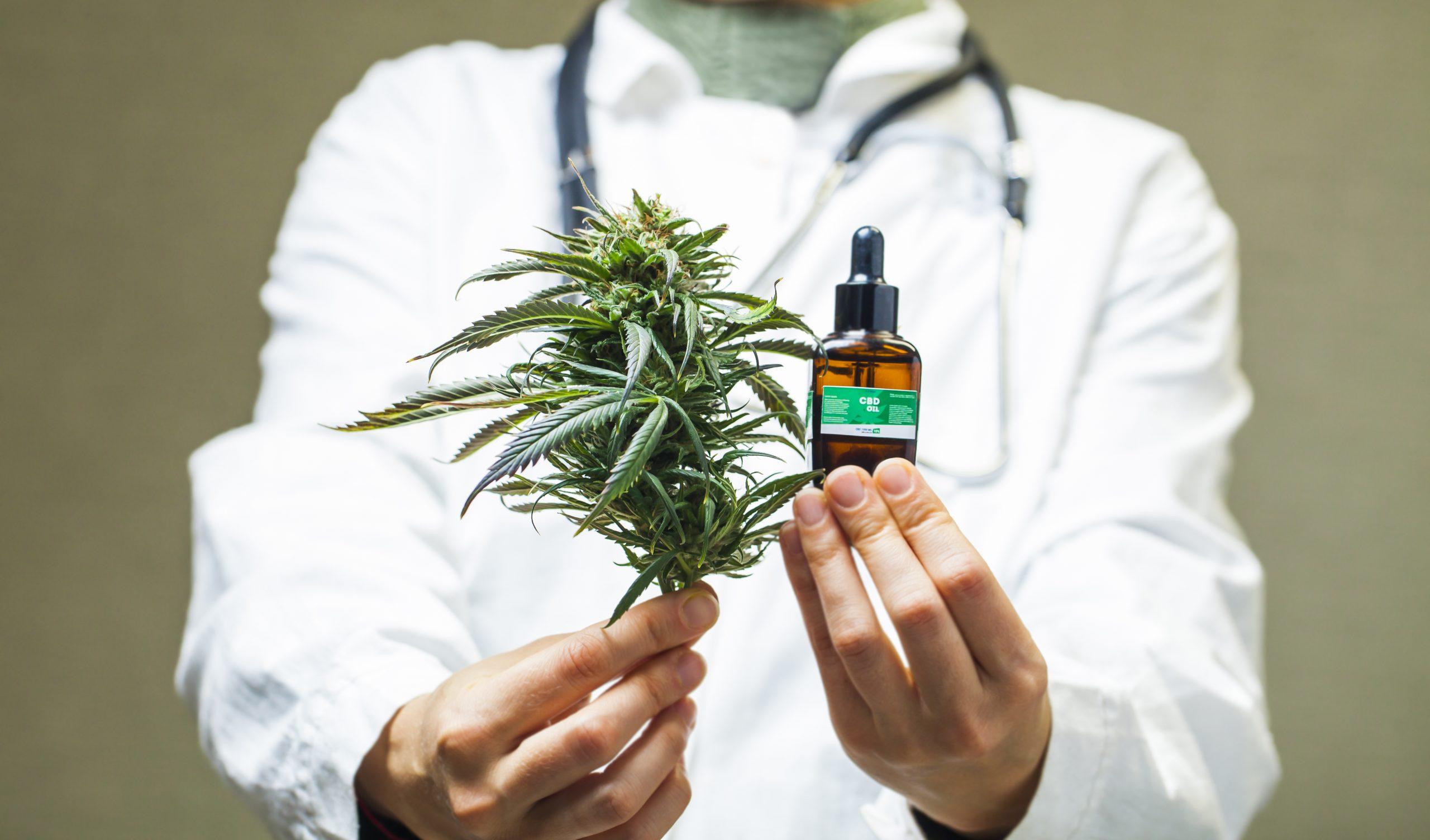 Cannabis medicinal: como, por que e para quê usar?